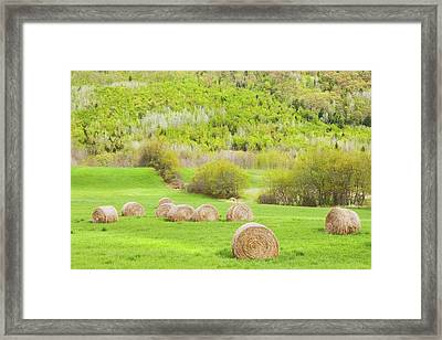 Dry Hay Bales In Spring Farm Field Maine Framed Print
