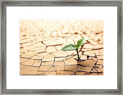 Dry Land Framed Print by Boon Mee