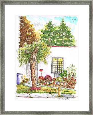 Dry Tree In Sherbourne Drive - West Hollywood - California Framed Print