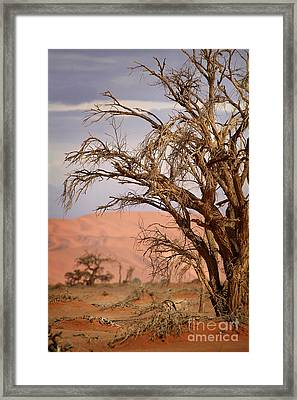 Dry Tree In The Desert Framed Print