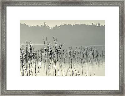 Drying In The Sun Framed Print by Guido Montanes Castillo