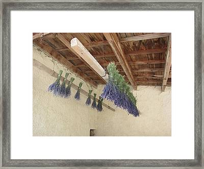 Drying Lavender Framed Print by Pema Hou