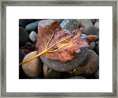 Drying Leaf Framed Print by Mike Lee