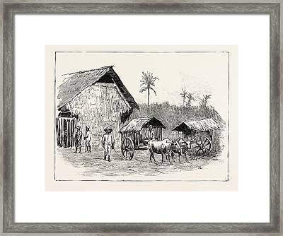 Drying Sheds For Tobacco, Sumatra, Indonesia Framed Print