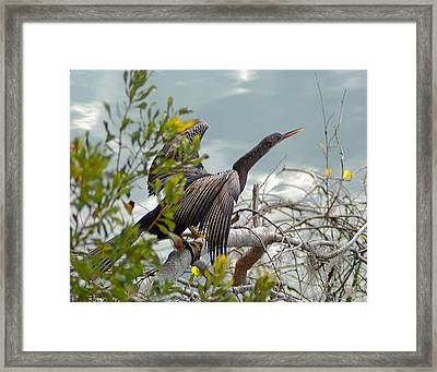 Drying Time Wil 47 Framed Print