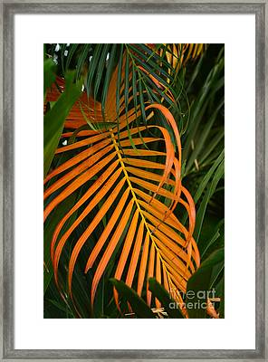 Dryness Framed Print by Michelle Meenawong