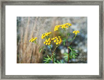 Dual Framed Print by James Taylor
