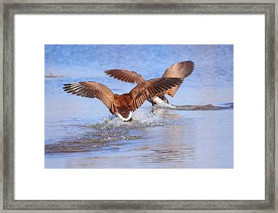 Dual Landing Framed Print by Valarie Davis
