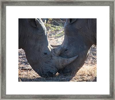 Dual Rhino's Framed Print by Craig Brown
