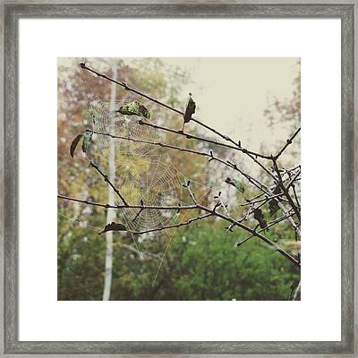 Framed Print featuring the photograph Dual Webs by Nikki McInnes