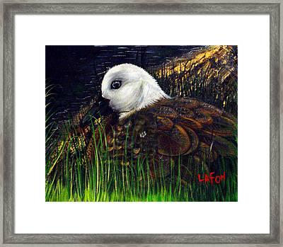 Duck At Dusk Framed Print
