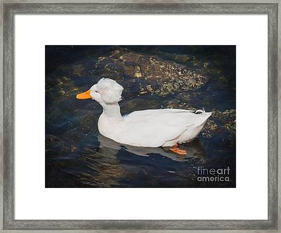 White Crested Duck Framed Print by Ernest Puglisi