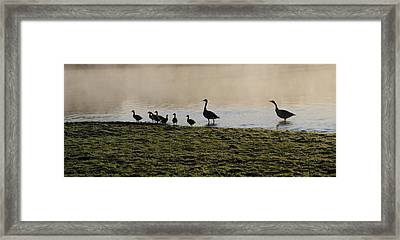Duck Family Panorama Framed Print by Bill Cannon