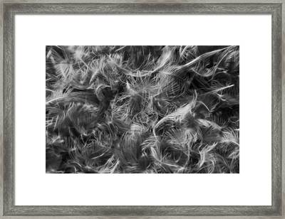 Duck Feathers Framed Print