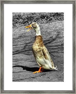 Duck I Can Sing Framed Print