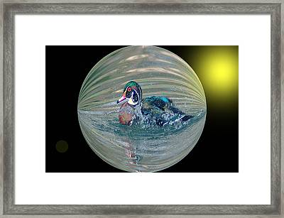 Duck In A Bubble  Framed Print by Jeff Swan