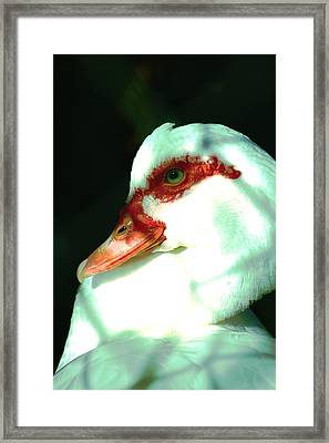 Duck Framed Print by Jennifer Burley