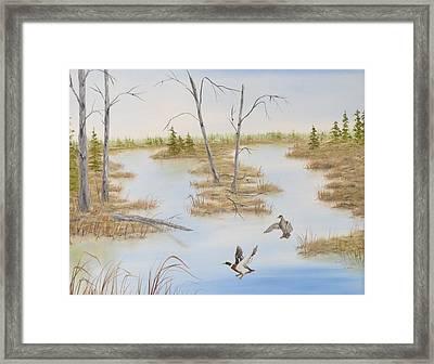Duck Marsh Framed Print by Janet Hufnagle