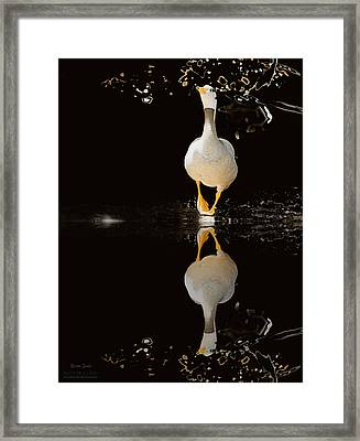 Duck On Stage Framed Print