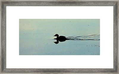 Duck On Water Framed Print