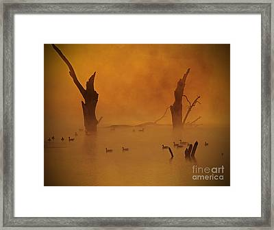 Duck Pond Framed Print