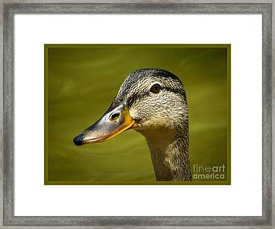 Framed Print featuring the photograph Duck Protrait by Brenda Bostic