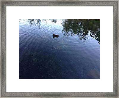 Duck Framed Print by Ron Torborg