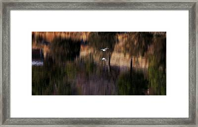 Duck Scape 2 Framed Print