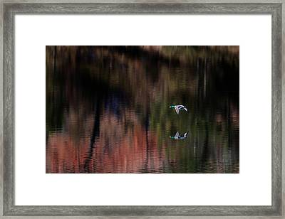 Duck Scape 3 Framed Print