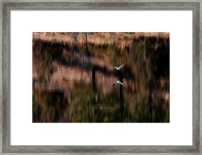 Duck Scape Framed Print