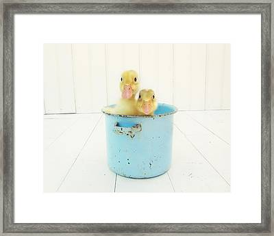 Duck Soup Framed Print by Amy Tyler