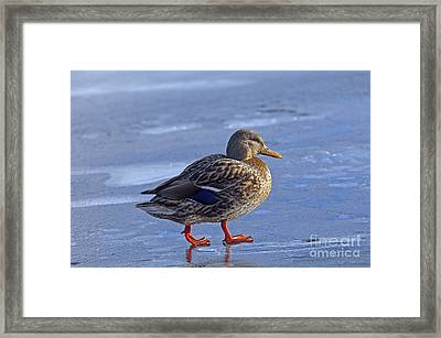 Duckie On Ice Framed Print