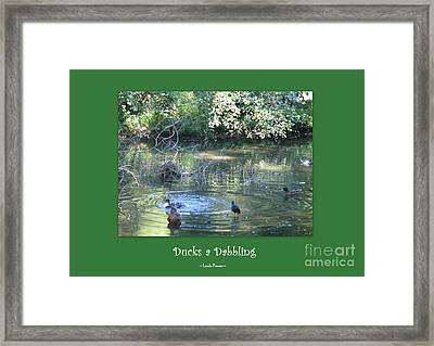 Ducks A Dabbling Framed Print