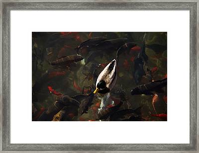 Ducks And Fish Framed Print