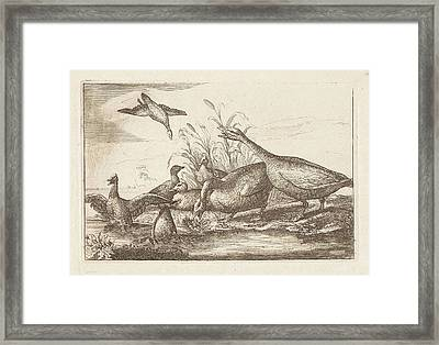 Ducks And Geese, Francis Barlow, Pieter Schenk Framed Print