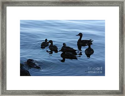 Ducks At Dusk Framed Print