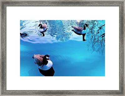 Framed Print featuring the photograph Ducks At Pond by Marwan Khoury