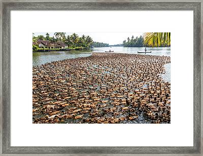 Ducks Being Herded Along The Waterway Framed Print by Peter Adams