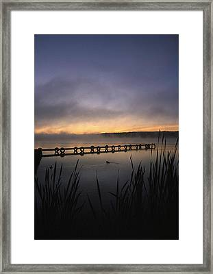 Ducks Dock And Reeds Framed Print