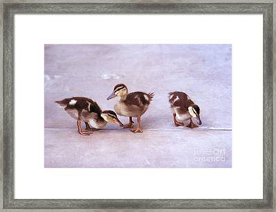 Framed Print featuring the photograph Ducks In A Row by Clare VanderVeen