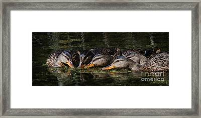 Framed Print featuring the photograph Ducks In A Row by Jan Piller
