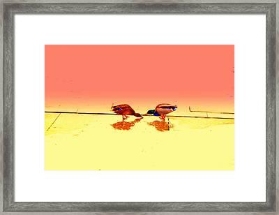 When Ducks Are In Love Nothing Else Matter  Framed Print by Hilde Widerberg