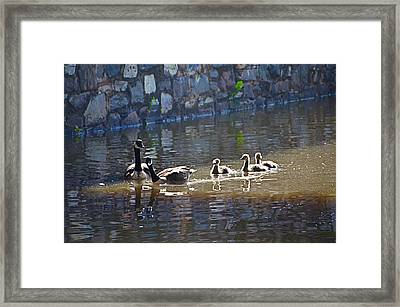 Ducks In The Canal Framed Print by Bill Cannon