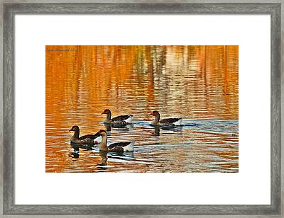 Framed Print featuring the photograph Ducks In The Fall by Lynn Hopwood