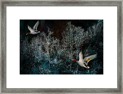 Framed Print featuring the photograph Ducks In Trees West Fork Number Three by Bob Coates