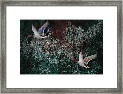 Framed Print featuring the photograph Ducks In Trees West Fork Number Two by Bob Coates