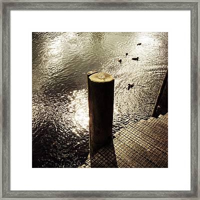 Ducks Framed Print by Les Cunliffe