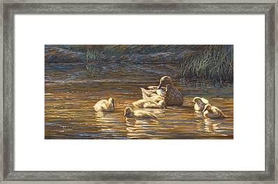 Ducks Framed Print by Lucie Bilodeau