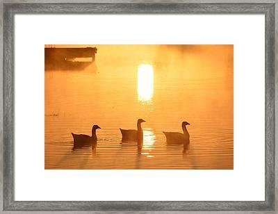 Ducks On A Foggy Lake At Sunrise Framed Print