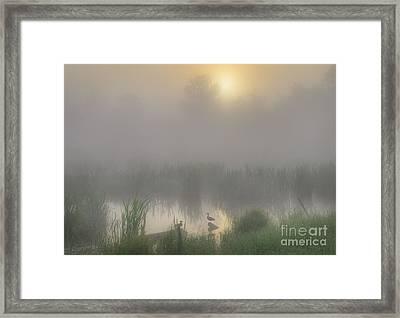 Ducks On A Pond Framed Print by Dan Jurak